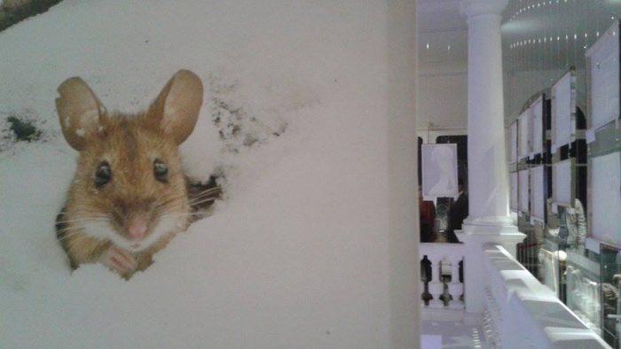 Wildlife la Antipa, plus ce nu știați despre muzeu