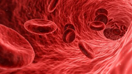 Echipa este sistemul sanguin al organizaţiei: Cum folosim tehnologia ca să colaborăm mai bine