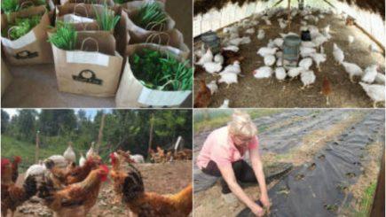 Micii producători bio le redau românilor gusturile tradiționale