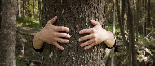 Această țară nu mai acceptă tăierea copacilor