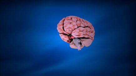 Când înțelegi creierul, ajungi la toți oamenii