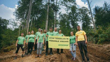 Cum luptă Greenpeace cu nepăsarea și corupția din România