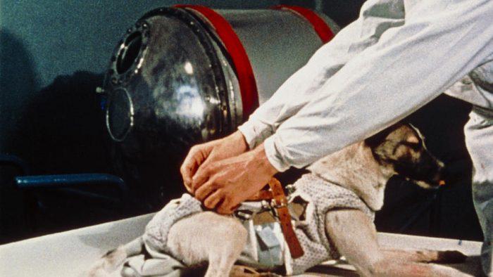 """Devenită eroină planetară: 60 de ani de la trimiterea în spațiu a """"primului cosmonaut"""" al planetei – cățelușa Laika"""