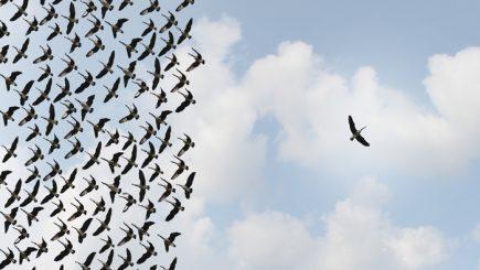 Liderul ideal e cel care deține arta de a scoate ce e mai bun din oamenii pe care îi conduce
