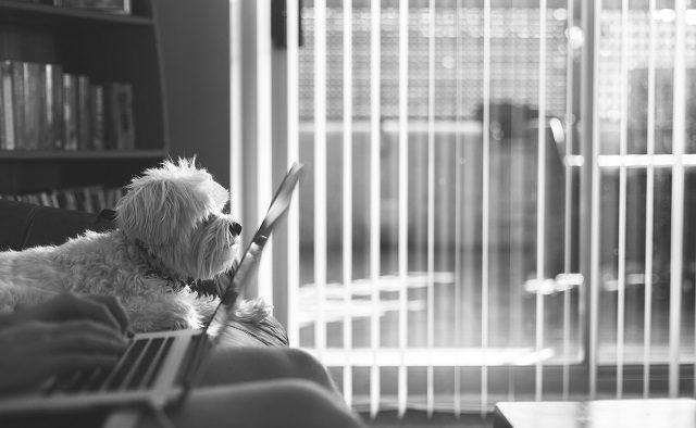 Cum poți să lucrezi de acasă fără să o iei razna?