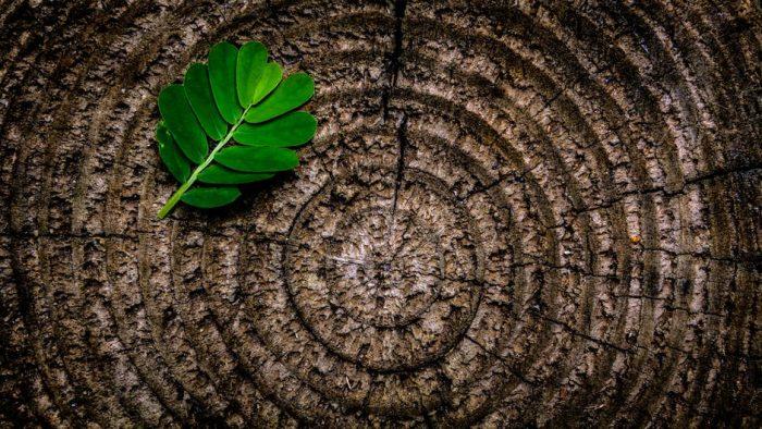 Lăsați lucrurile să crească firesc: Trei principii Tao de aplicat la locul de muncă