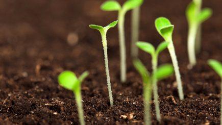 Adevăr sau marketing la produsele bio?