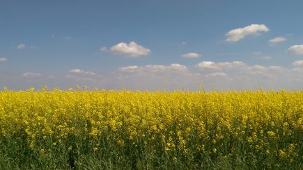 """Semințe în """"nor"""": 1.500 de fermieri accesează informații în cloud"""