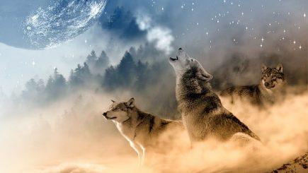 """Singurătatea CEO-ului. """"Ceilalți lupi m-ar sfâșia, dacă ar ști că urletul meu e, în realitate, un plâns"""" – Octavian Paler"""