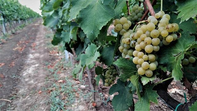 De profesie antreprenor. După imobiliare și eoliene, Bogdan Mihalcea pariază pe viticultura biodinamică