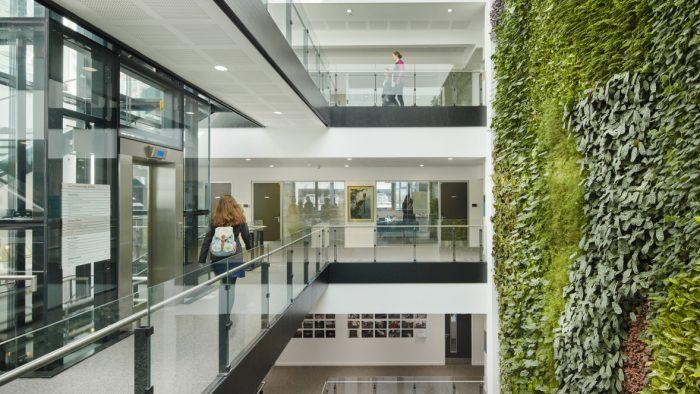 Birouri verzi: Cum să integrăm natura în spațiile în care lucrăm