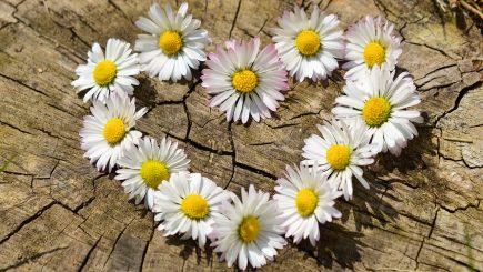 """Începe """"Flori pentru suflet.Remember Florian Pittiș""""ediția a VII-a"""