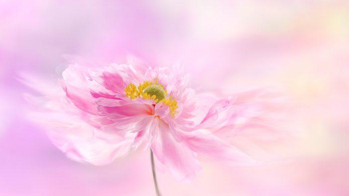 Frumusețe și bunătate. Cele mai traduse cuvinte din lume